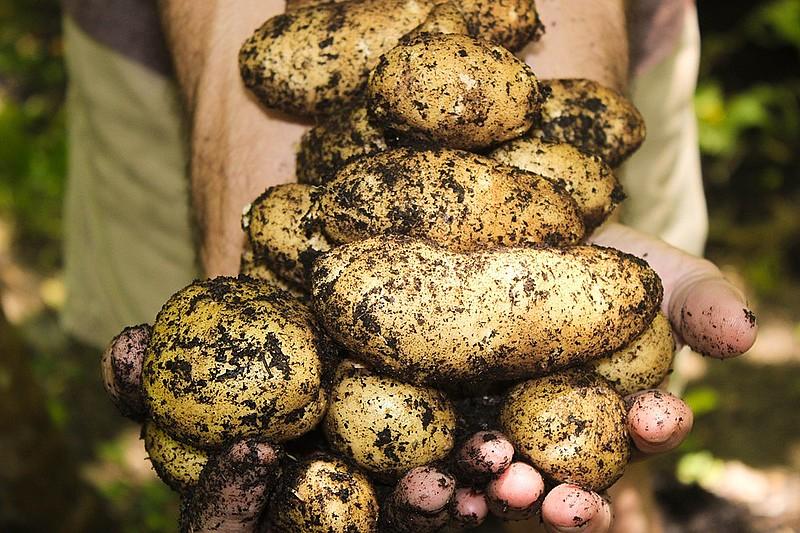 Na edição desta quarta-feira (22), o programa ensinou como comer alimentos como batata e milho sem utilizar sal