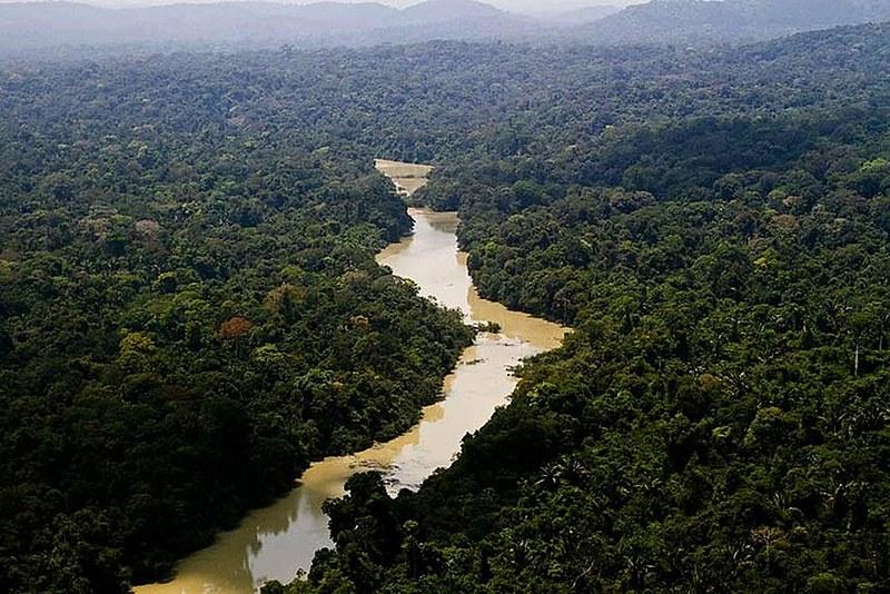 Dia da Amazônia é celebrado anualmente em 5 de setembro